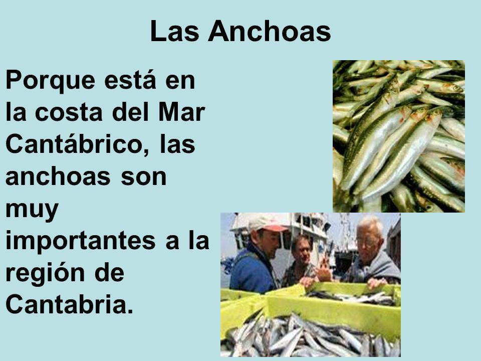 Las Anchoas Porque está en la costa del Mar Cantábrico, las anchoas son muy importantes a la región de Cantabria.