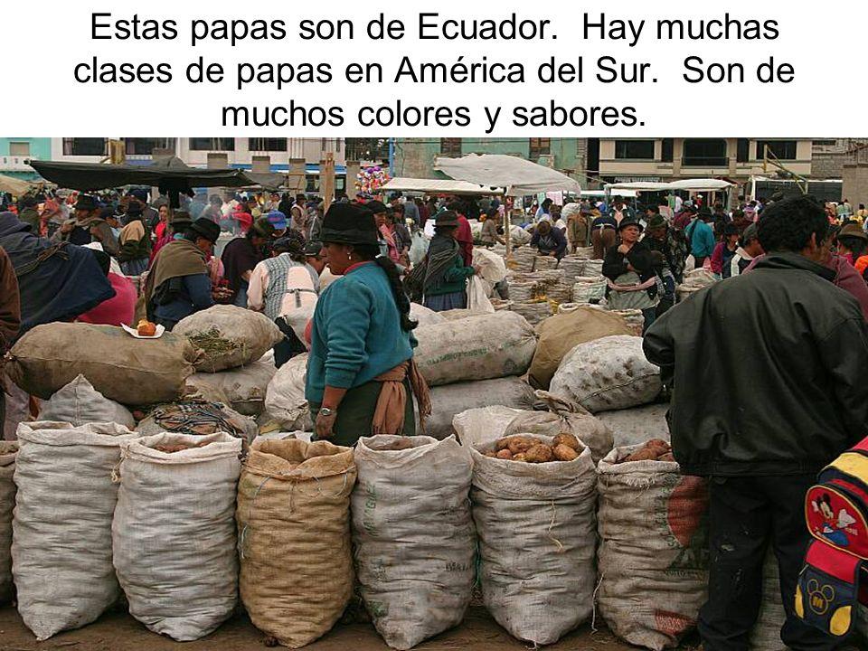 Estas papas son de Ecuador