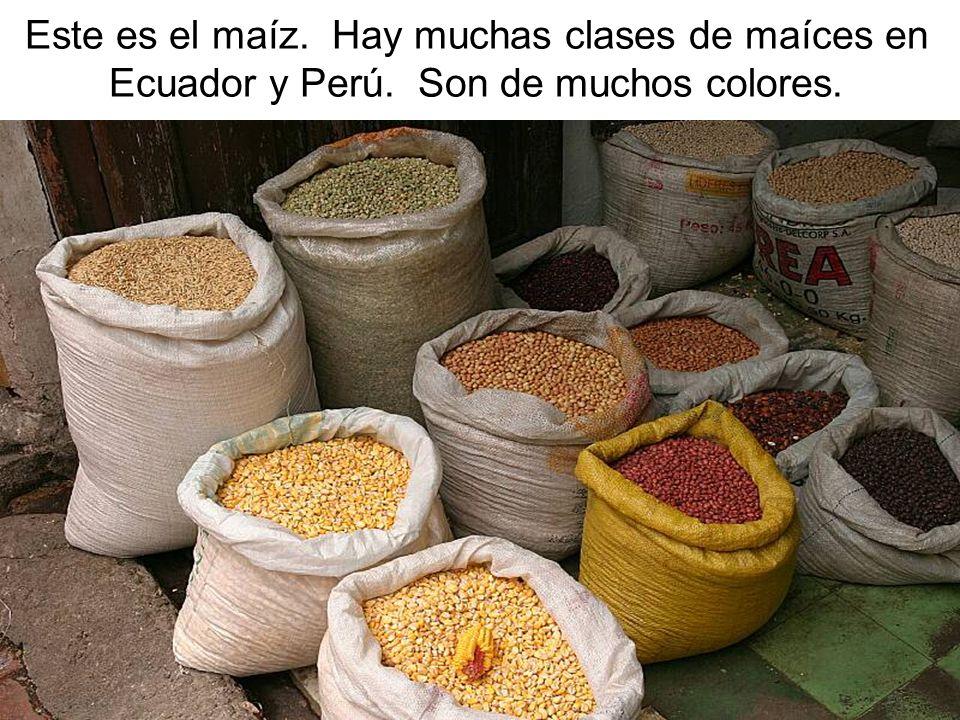 Este es el maíz. Hay muchas clases de maíces en Ecuador y Perú