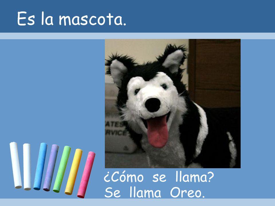 Es la mascota. ¿Cómo se llama Se llama Oreo.