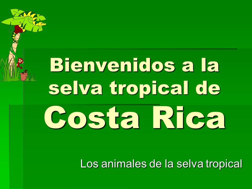 Bienvenidos a la selva tropical de Costa Rica