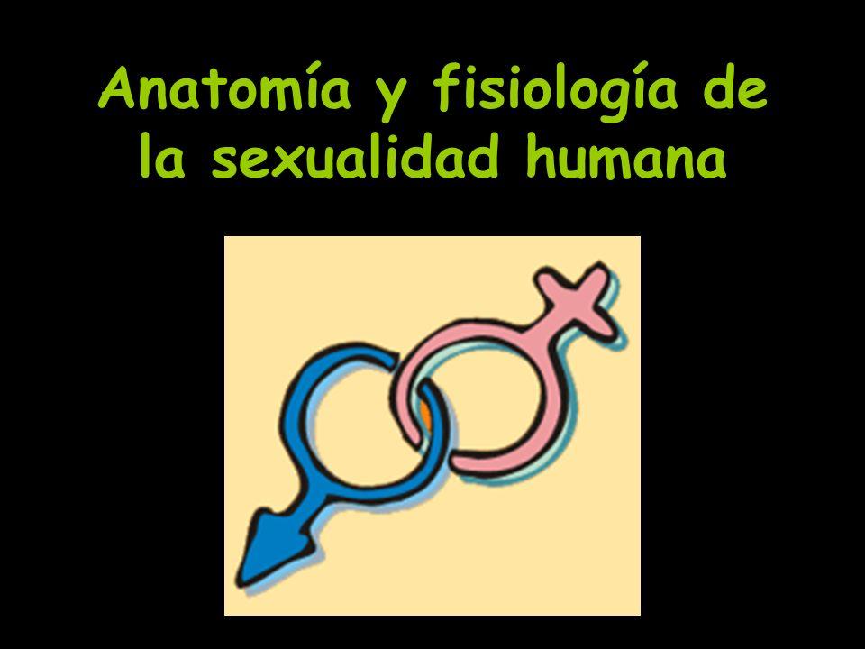 Anatomía y fisiología de la sexualidad humana - ppt video online ...