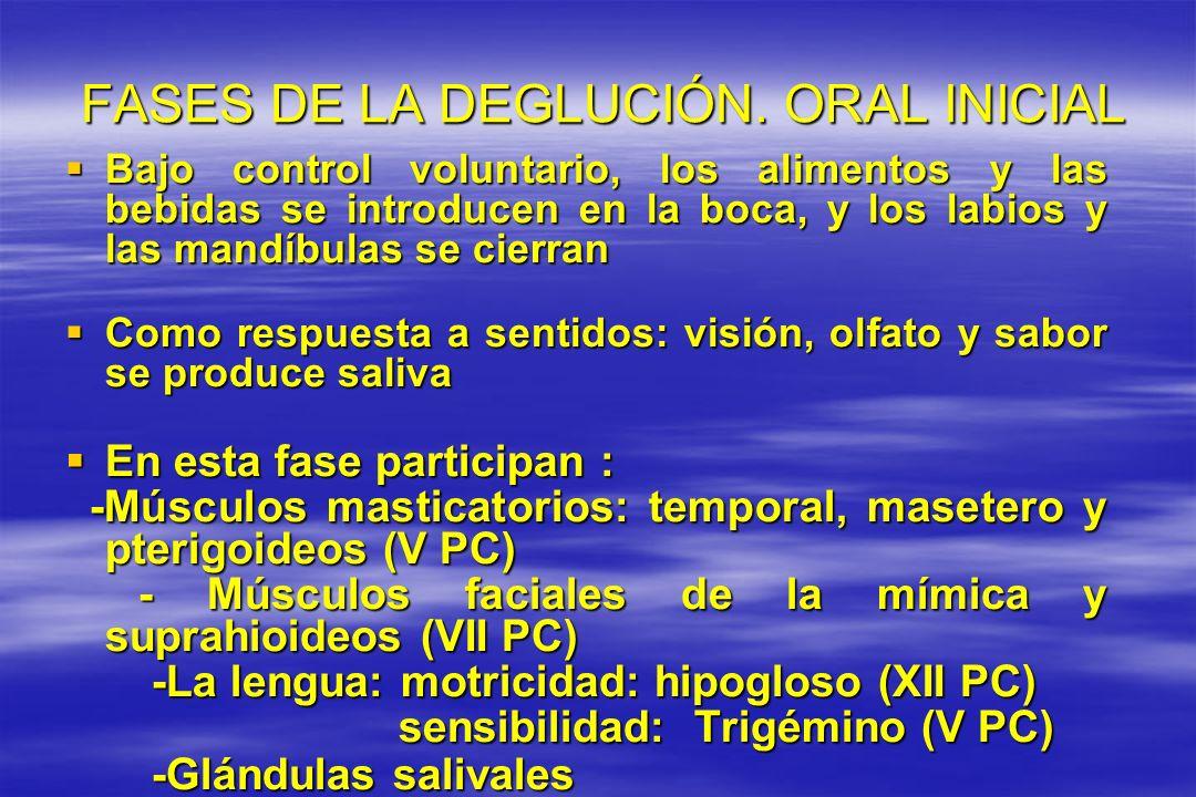 FASES DE LA DEGLUCIÓN. ORAL INICIAL