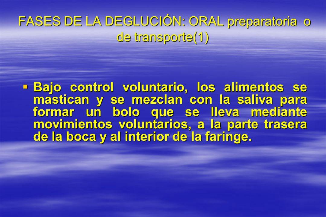 FASES DE LA DEGLUCIÓN: ORAL preparatoria o de transporte(1)