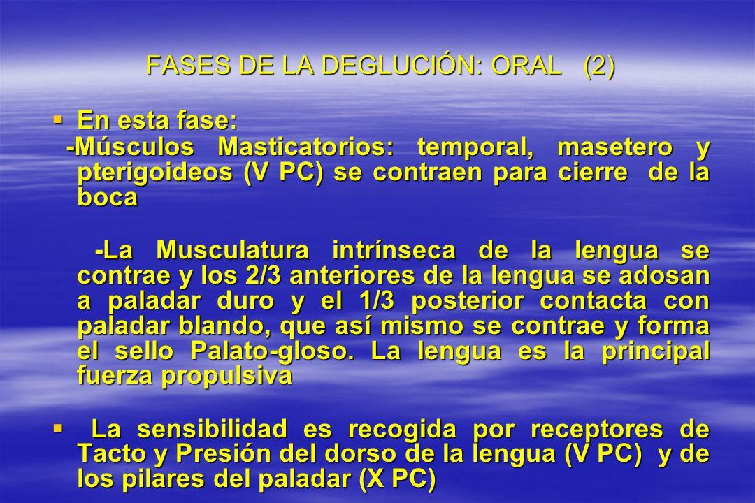 FASES DE LA DEGLUCIÓN: ORAL (2)