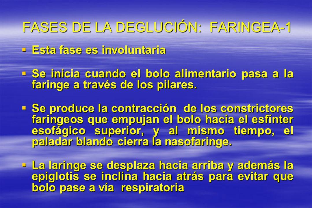 FASES DE LA DEGLUCIÓN: FARINGEA-1