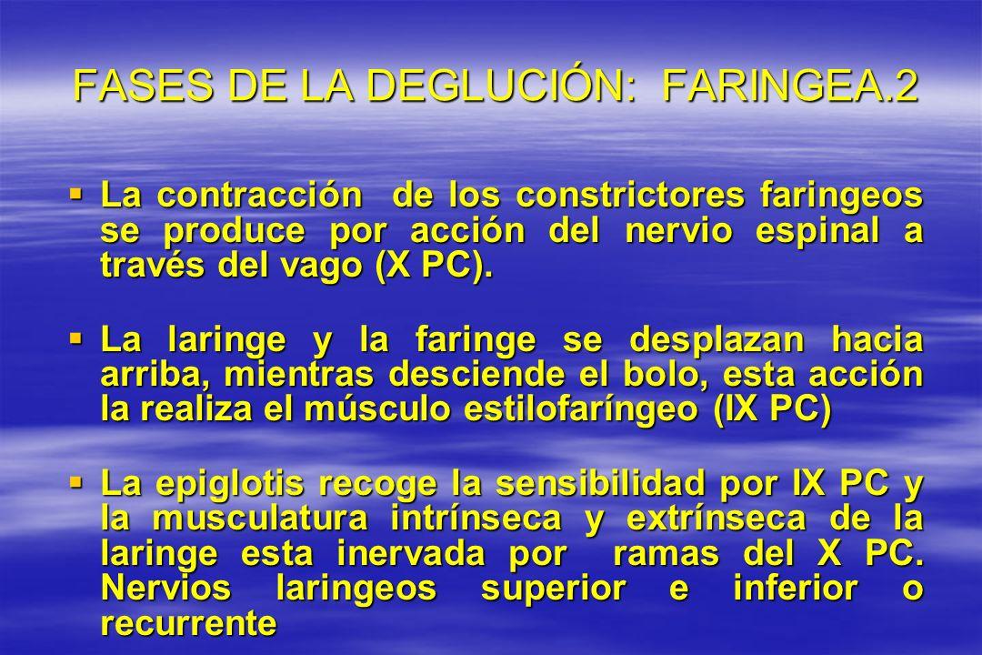 FASES DE LA DEGLUCIÓN: FARINGEA.2