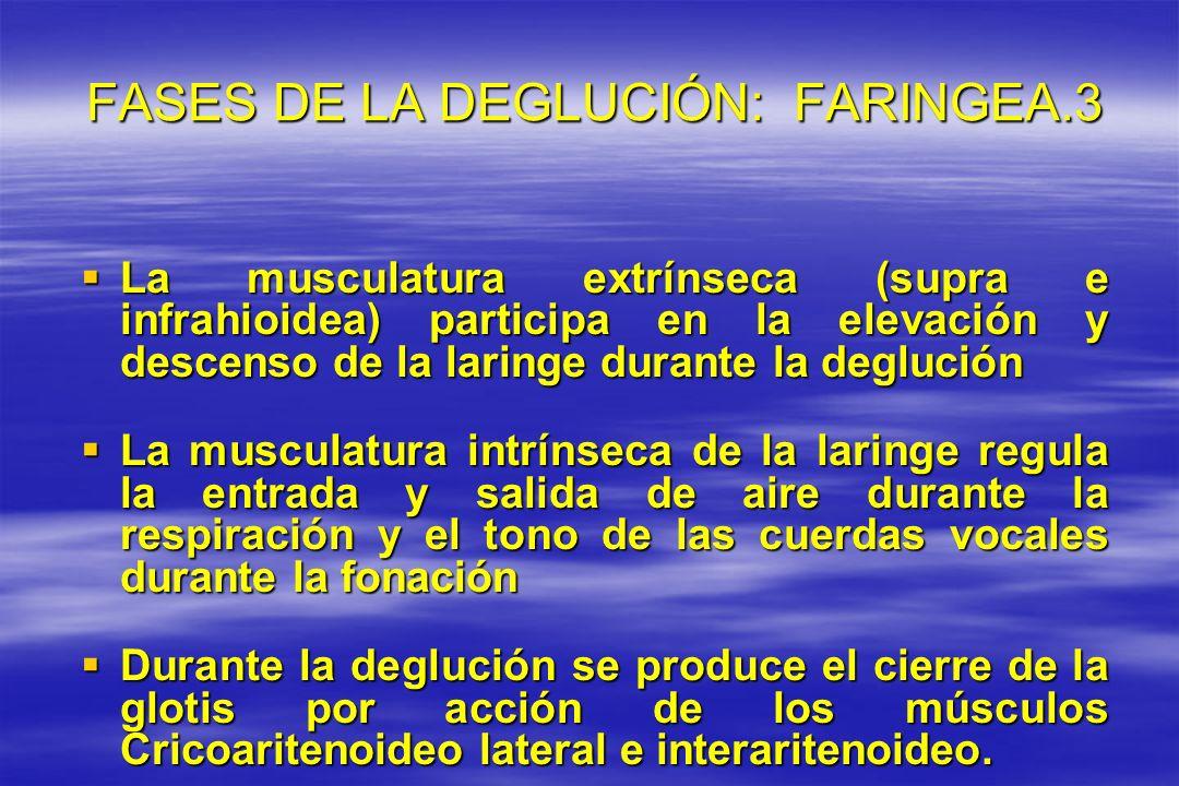 FASES DE LA DEGLUCIÓN: FARINGEA.3