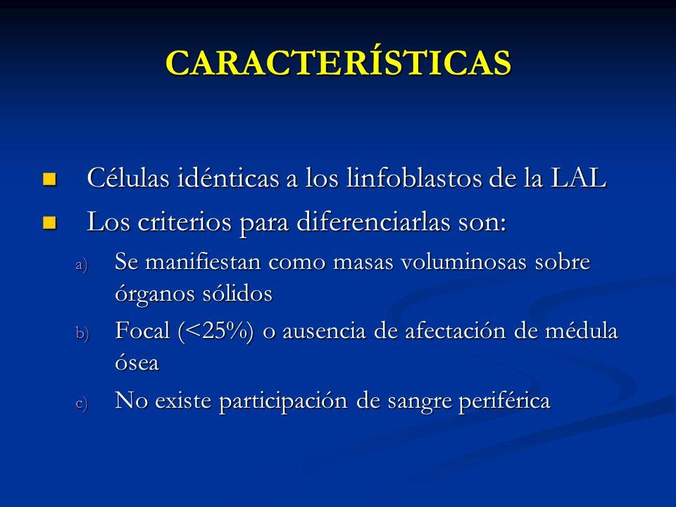 CARACTERÍSTICAS Células idénticas a los linfoblastos de la LAL