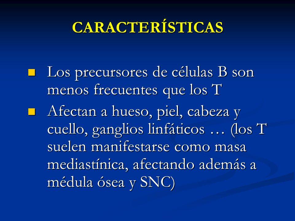 CARACTERÍSTICAS Los precursores de células B son menos frecuentes que los T.