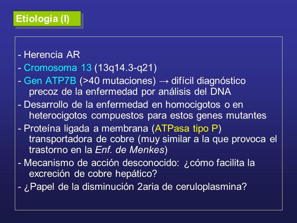 Etiología (I)- Herencia AR. - Cromosoma 13 (13q14.3-q21)