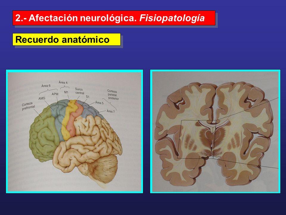 2.- Afectación neurológica. Fisiopatología
