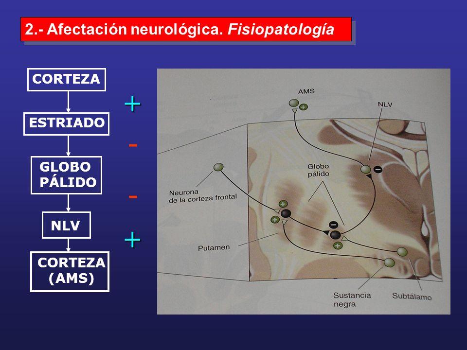 - - + + 2.- Afectación neurológica. Fisiopatología CORTEZA ESTRIADO