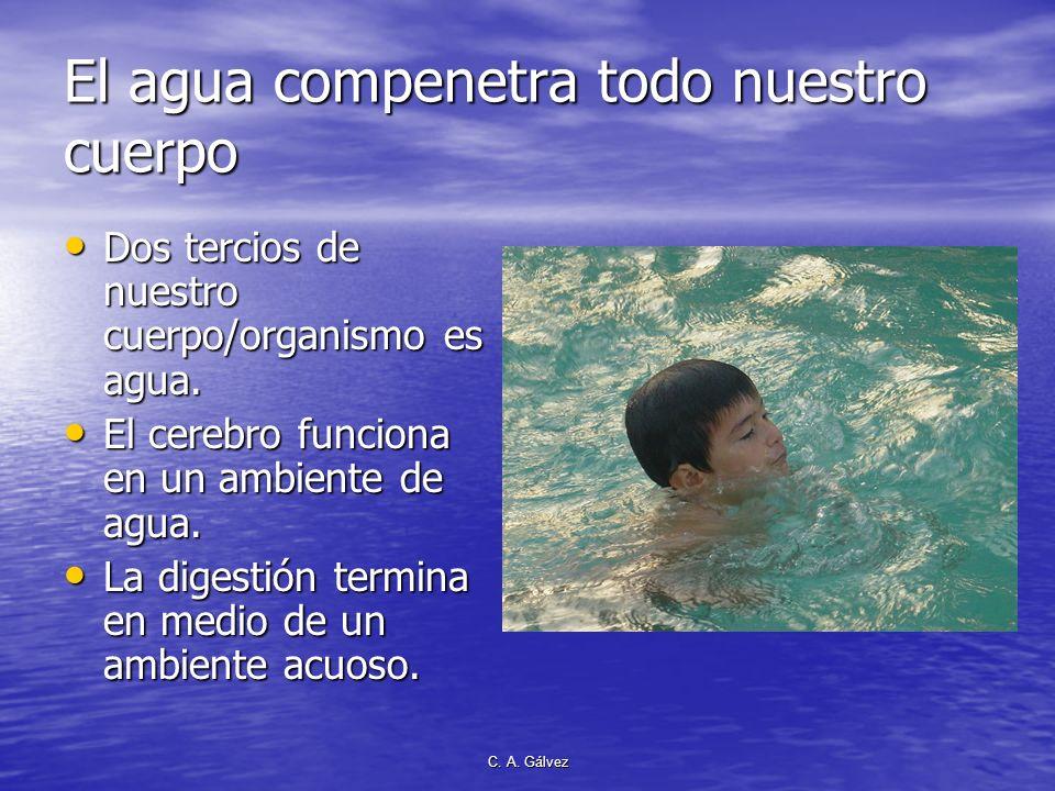 El agua compenetra todo nuestro cuerpo