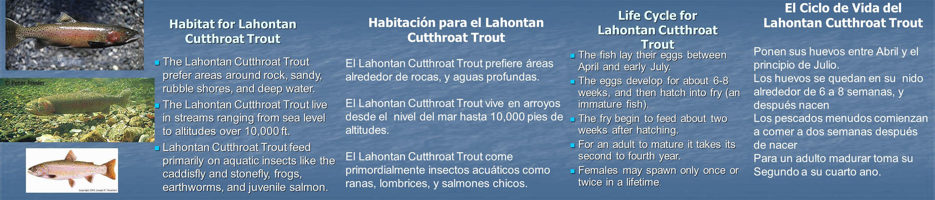 El Ciclo de Vida del Lahontan Cutthroat Trout