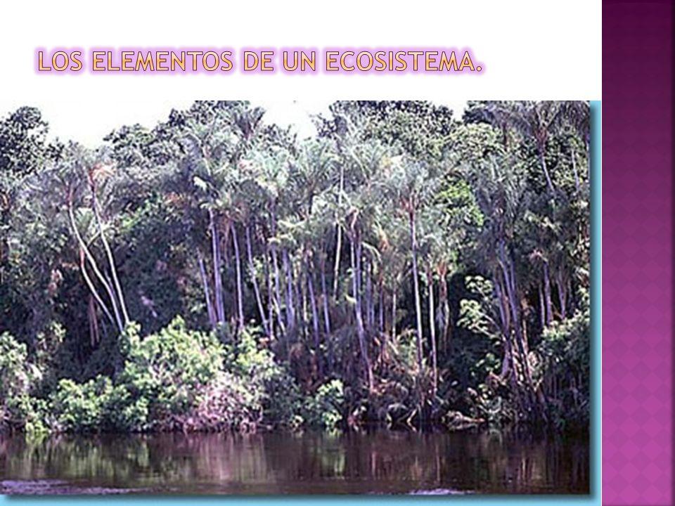los elementos de un ecosistema.