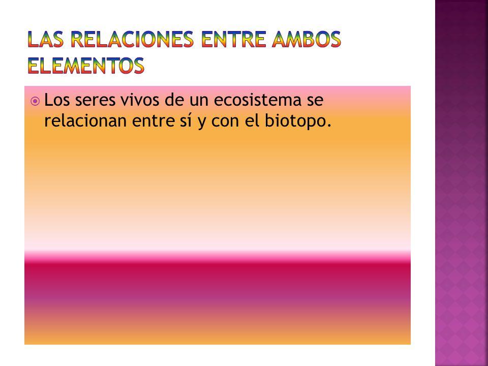 LAS RELACIONES ENTRE AMBOS ELEMENTOS