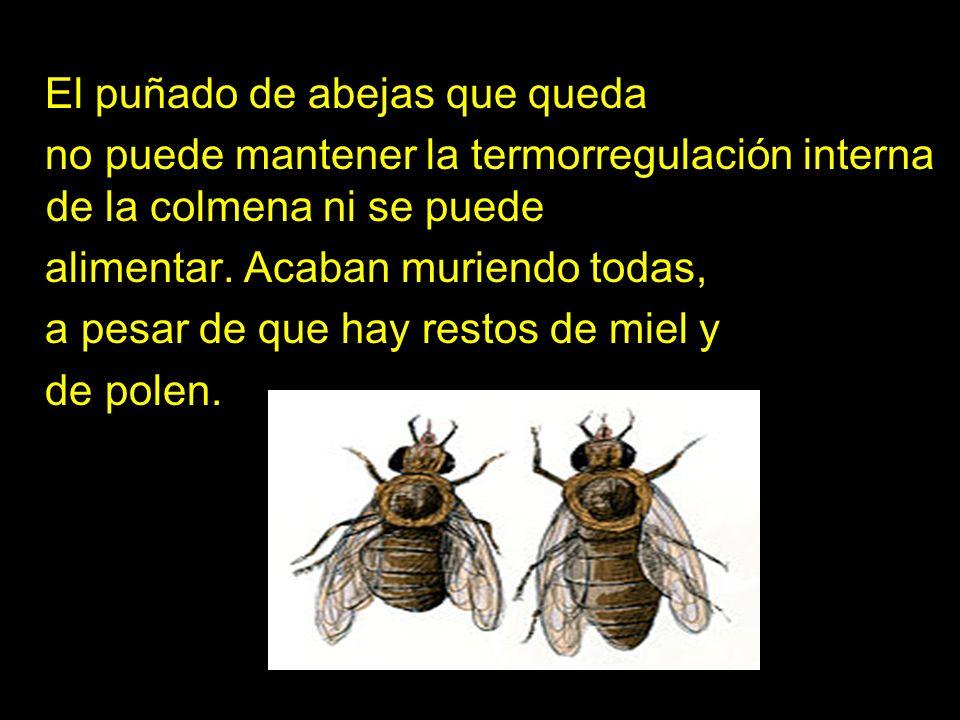 El puñado de abejas que queda