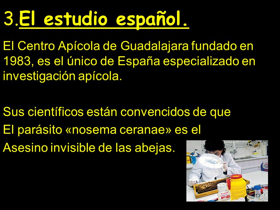 3.El estudio español. El Centro Apícola de Guadalajara fundado en 1983, es el único de España especializado en investigación apícola.