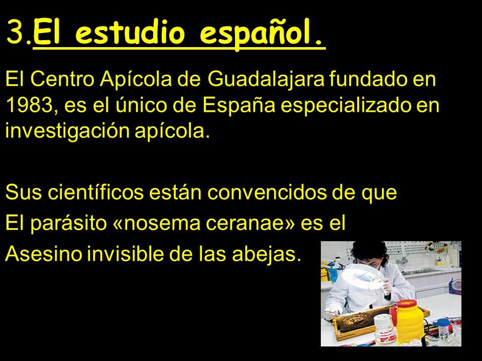 3.El estudio español.El Centro Apícola de Guadalajara fundado en 1983, es el único de España especializado en investigación apícola.