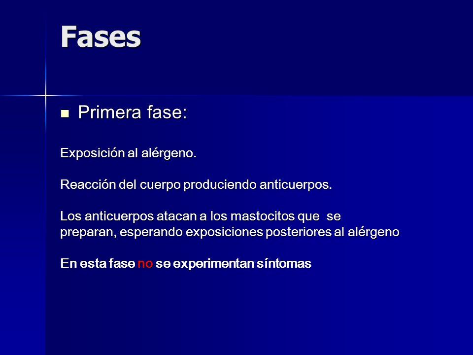Fases Primera fase: Exposición al alérgeno.