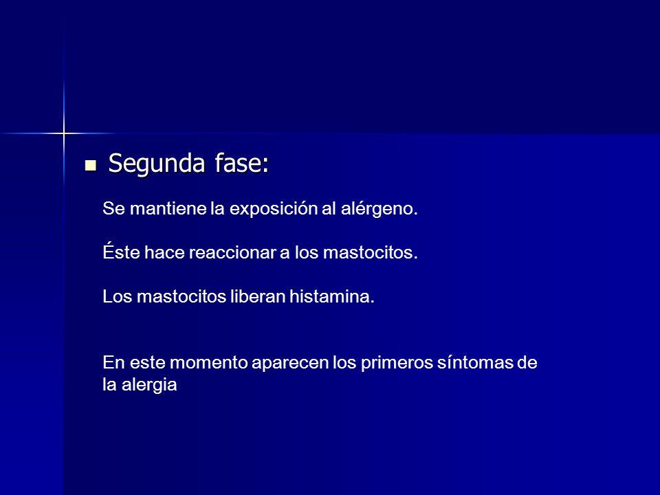 Segunda fase: Se mantiene la exposición al alérgeno.