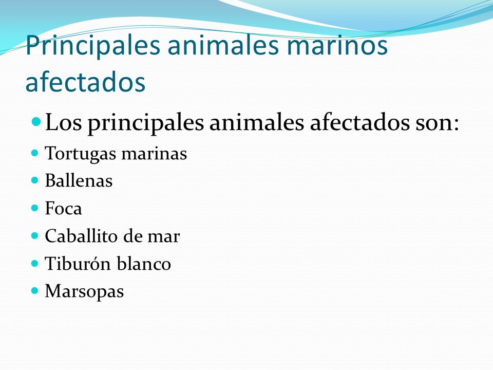Principales animales marinos afectados