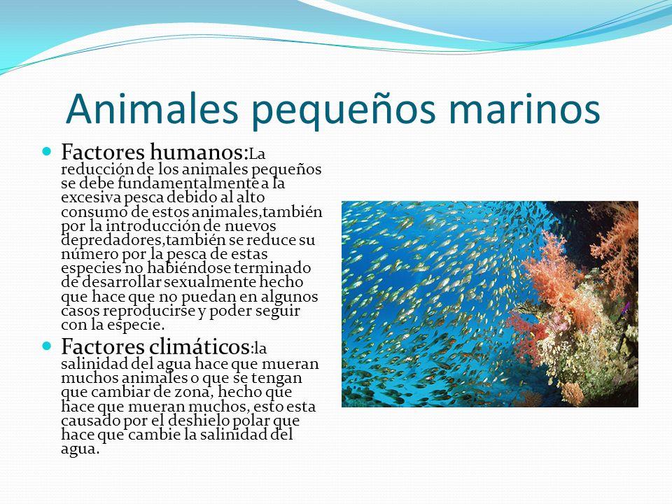 Animales pequeños marinos
