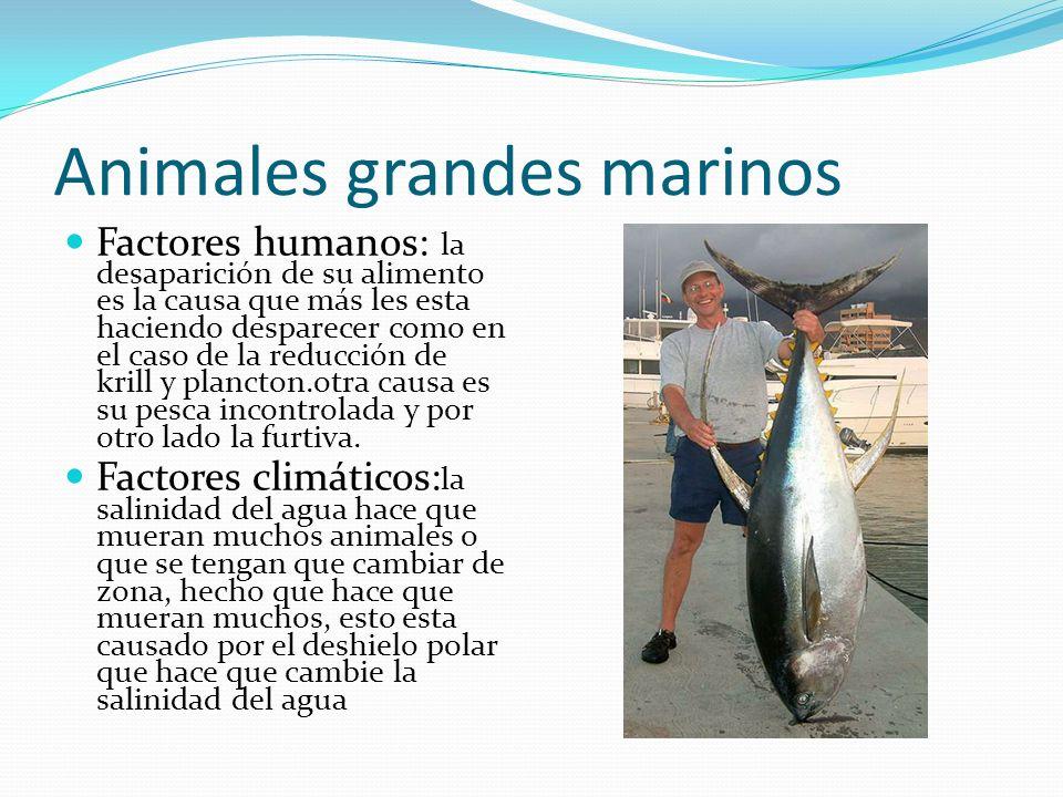 Animales grandes marinos