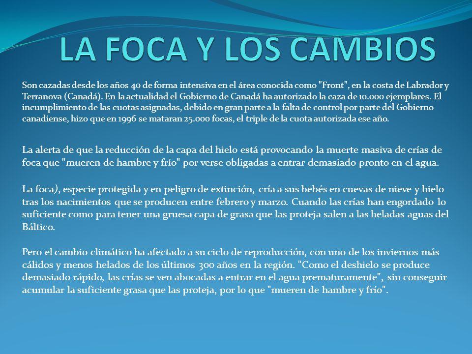 LA FOCA Y LOS CAMBIOS