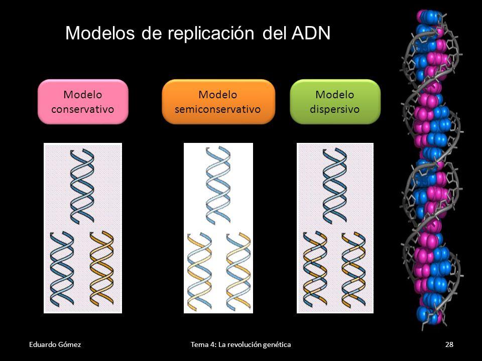 Modelos de replicación del ADN