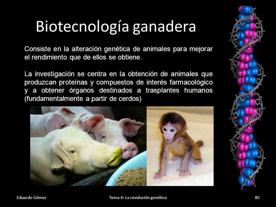 Biotecnología ganadera