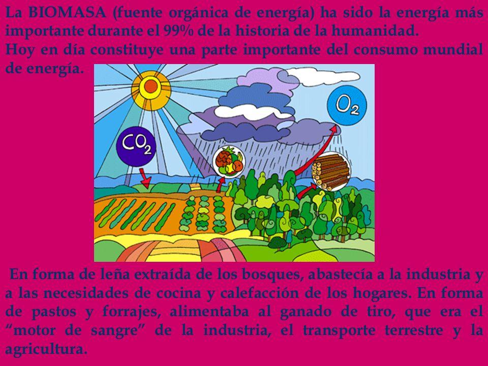 La BIOMASA (fuente orgánica de energía) ha sido la energía más importante durante el 99% de la historia de la humanidad.