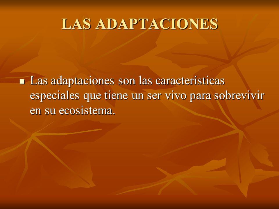 LAS ADAPTACIONES Las adaptaciones son las características especiales que tiene un ser vivo para sobrevivir en su ecosistema.