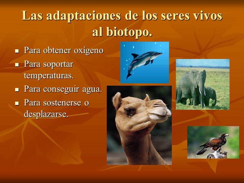 Las adaptaciones de los seres vivos al biotopo.