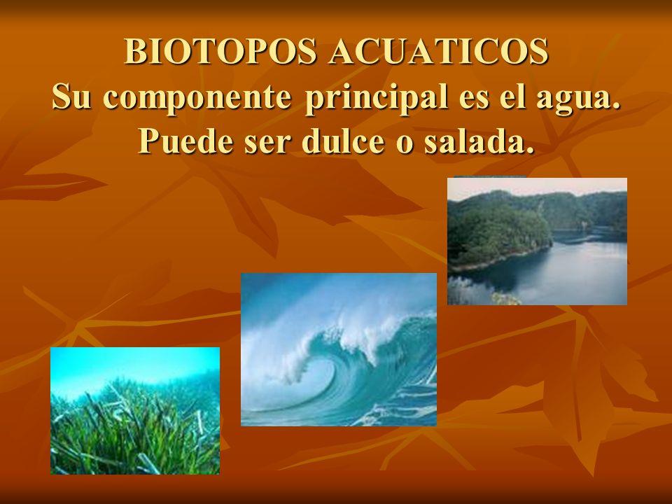 BIOTOPOS ACUATICOS Su componente principal es el agua