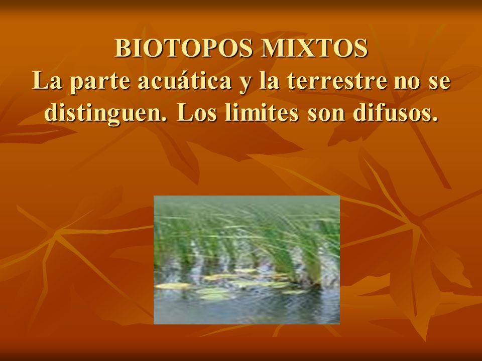 BIOTOPOS MIXTOS La parte acuática y la terrestre no se distinguen