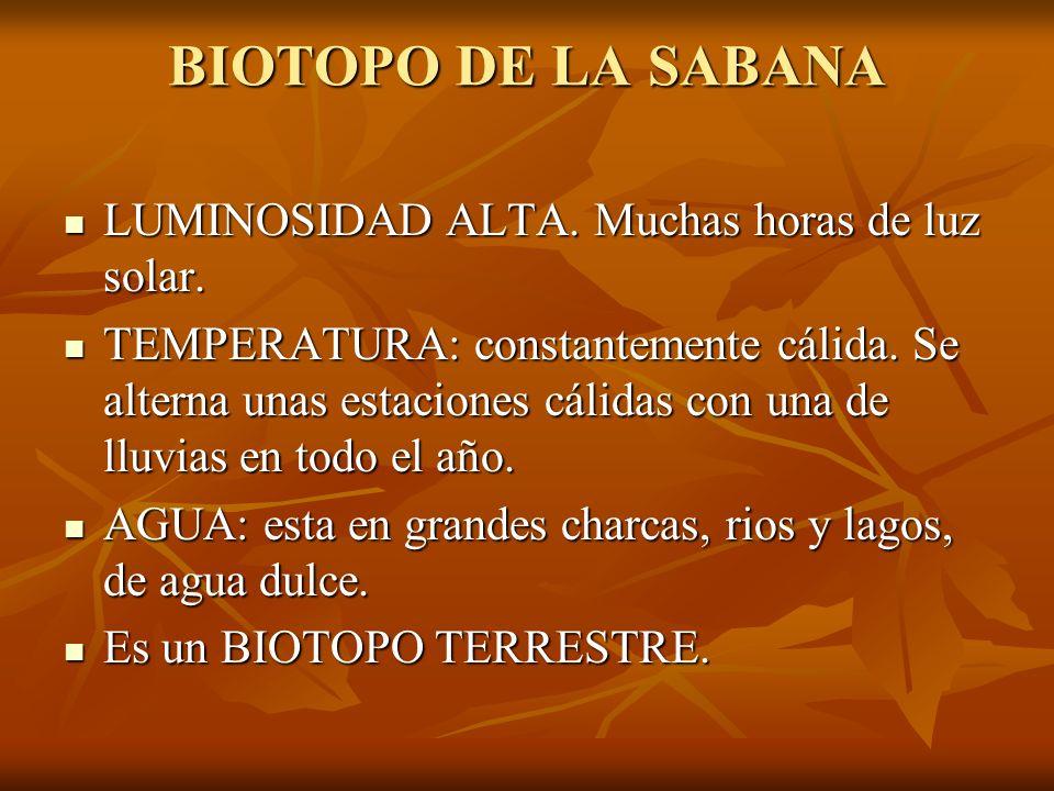 BIOTOPO DE LA SABANA LUMINOSIDAD ALTA. Muchas horas de luz solar.