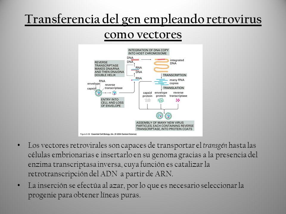 Transferencia del gen empleando retrovirus como vectores