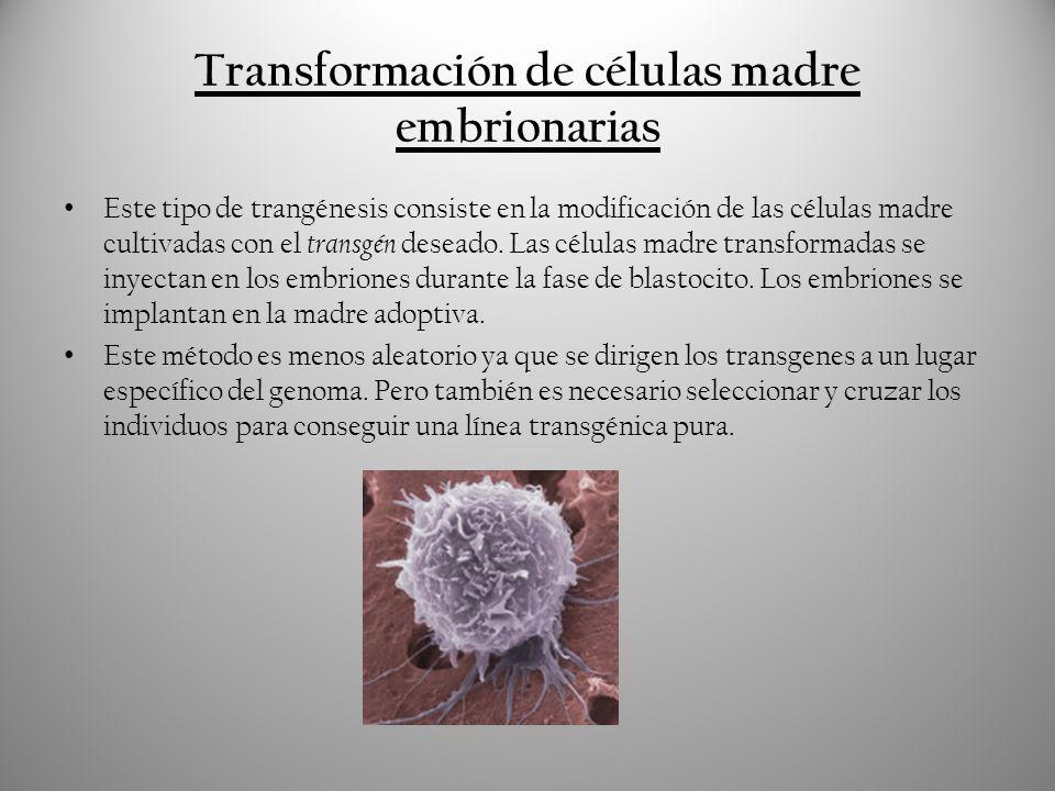 Transformación de células madre embrionarias