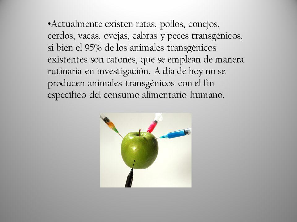 Actualmente existen ratas, pollos, conejos, cerdos, vacas, ovejas, cabras y peces transgénicos, si bien el 95% de los animales transgénicos existentes son ratones, que se emplean de manera rutinaria en investigación.