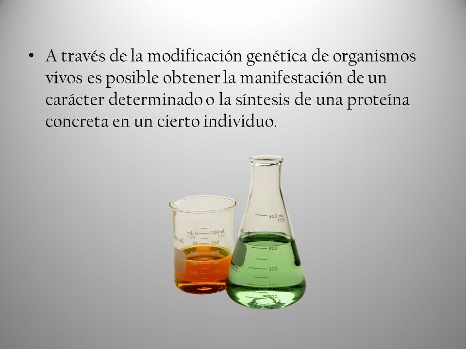 A través de la modificación genética de organismos vivos es posible obtener la manifestación de un carácter determinado o la síntesis de una proteína concreta en un cierto individuo.