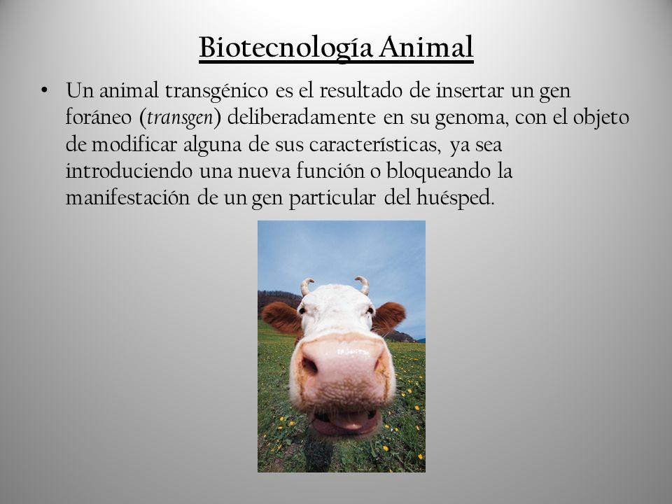Biotecnología Animal
