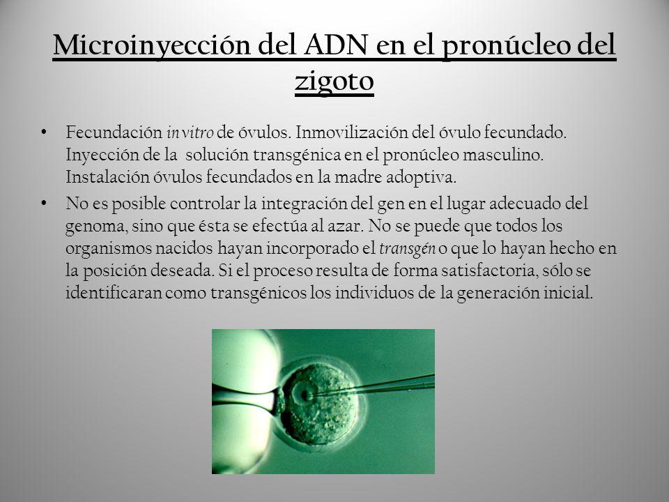 Microinyección del ADN en el pronúcleo del zigoto