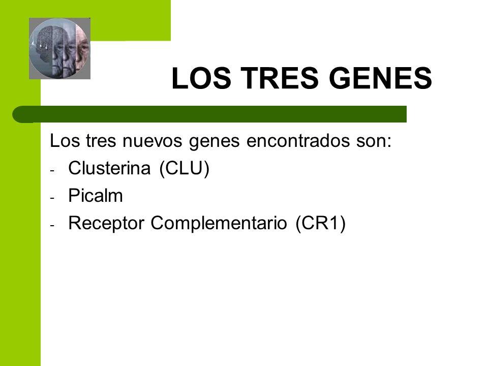 LOS TRES GENES Los tres nuevos genes encontrados son: Clusterina (CLU)