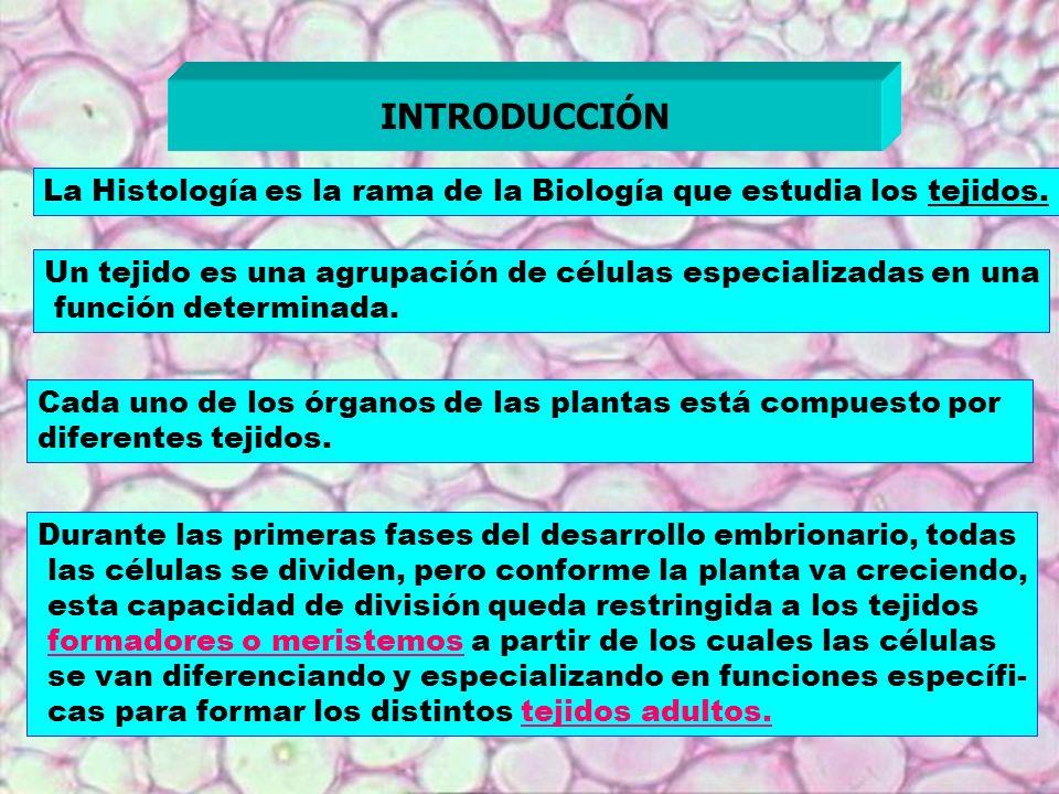 INTRODUCCIÓN La Histología es la rama de la Biología que estudia los tejidos. Un tejido es una agrupación de células especializadas en una.