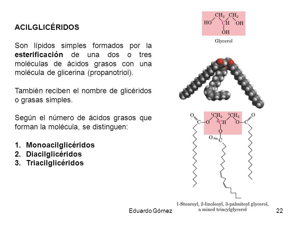 También reciben el nombre de glicéridos o grasas simples.