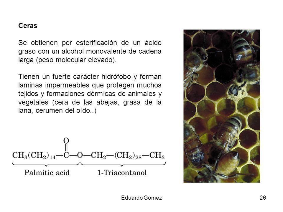 Ceras Se obtienen por esterificación de un ácido graso con un alcohol monovalente de cadena larga (peso molecular elevado).