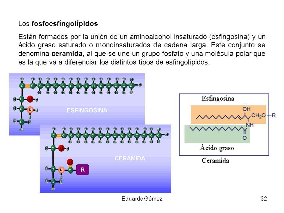 Los fosfoesfíngolípidos
