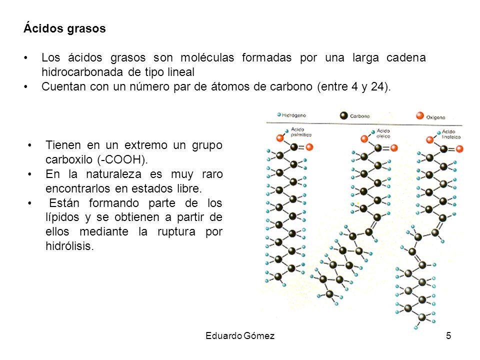 Cuentan con un número par de átomos de carbono (entre 4 y 24).